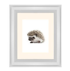 'Baby Hedgehog' Framed Print created using a free image from the new Shutterfly Art Library 'Baby & Nursery' collection
